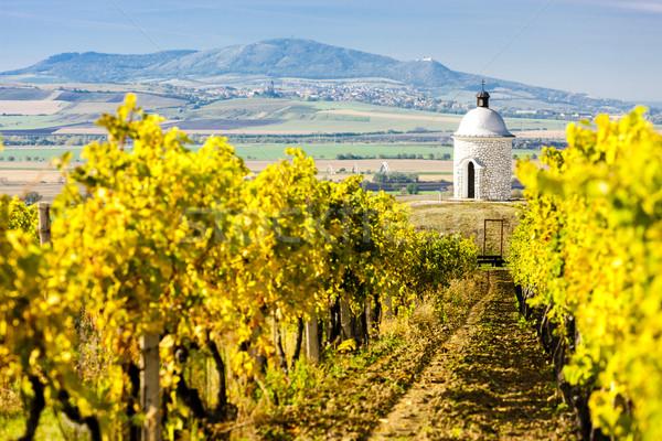 chapel with vineyard near Velke Bilovice, Czech Republic Stock photo © phbcz