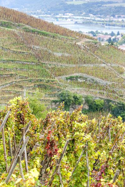Vinha França paisagem outono planta europa Foto stock © phbcz