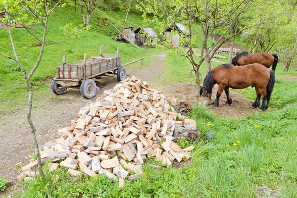 Foto stock: Caballo · granja · caballos · animales · país