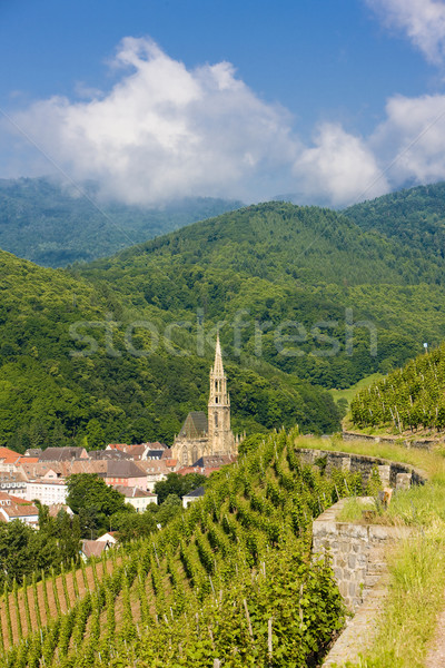 grand cru vineyard, Thann, Alsace, France Stock photo © phbcz