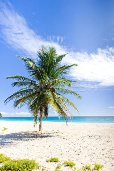 ストックフォト: バルバドス · カリビアン · ツリー · 風景 · 海 · 手のひら