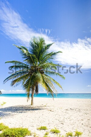Foul Bay, Barbados, Caribbean Stock photo © phbcz
