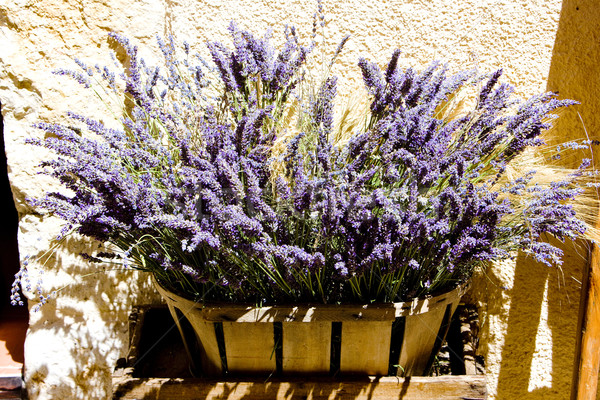 Monte França flor plantas buquê lavanda Foto stock © phbcz