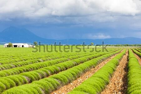 Lavendel veld plateau Frankrijk voorjaar landschap reizen Stockfoto © phbcz