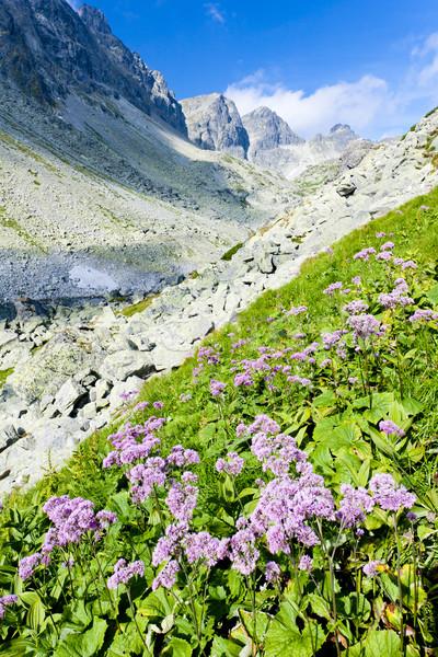Vallei hoog Slowakije bloem landschap plant Stockfoto © phbcz