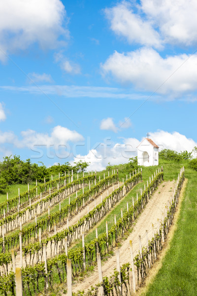 God''s torture near Hnanice with spring vineyard, Southern Morav Stock photo © phbcz