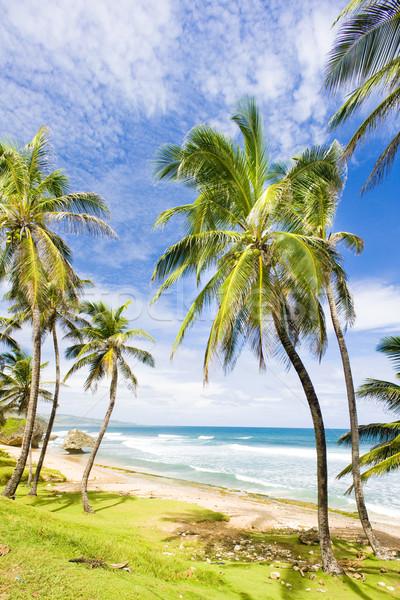 Keleti part Barbados Karib fa tájkép Stock fotó © phbcz