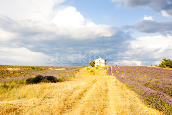 chapel with lavender field, Plateau de Valensole, Provence, Fran Stock photo © phbcz