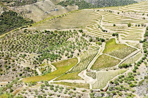 谷 ポルトガル 旅行 工場 ヨーロッパ 自然 ストックフォト © phbcz