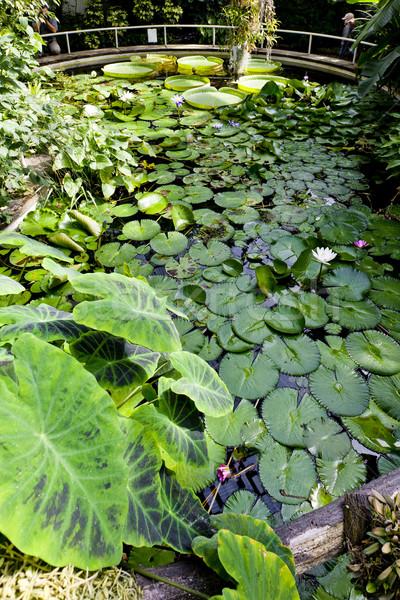 Giardino botanico Praga Repubblica Ceca foglia giardino verde Foto d'archivio © phbcz