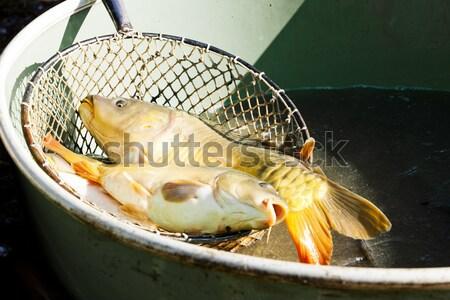 Colheita lagoa pescaria animal tanque pescador Foto stock © phbcz