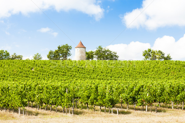 Vina molino de viento departamento arquitectura Europa vid Foto stock © phbcz