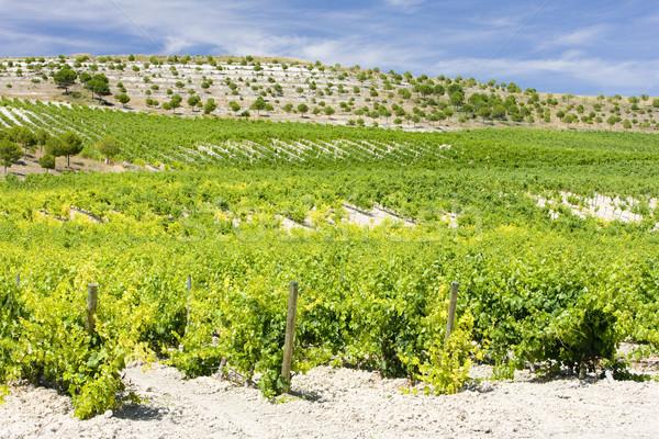vineyard near Villabanez, Valladolid Province, Castile and Leon, Stock photo © phbcz
