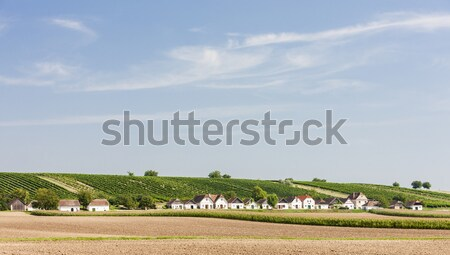 Stock photo: wine cellars with vineyard, Diepolz, Lower Austria, Austria