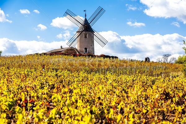 виноградник Windmill здании осень архитектура завода Сток-фото © phbcz
