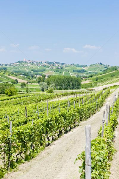 vineyars in Asti Region, Piedmont, Italy Stock photo © phbcz