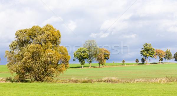 Paisagem outono planta cair prado Foto stock © phbcz