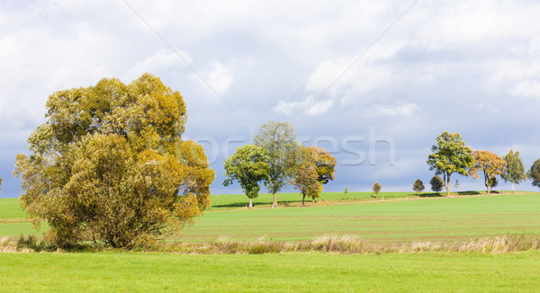 пейзаж осень завода осень луговой Сток-фото © phbcz