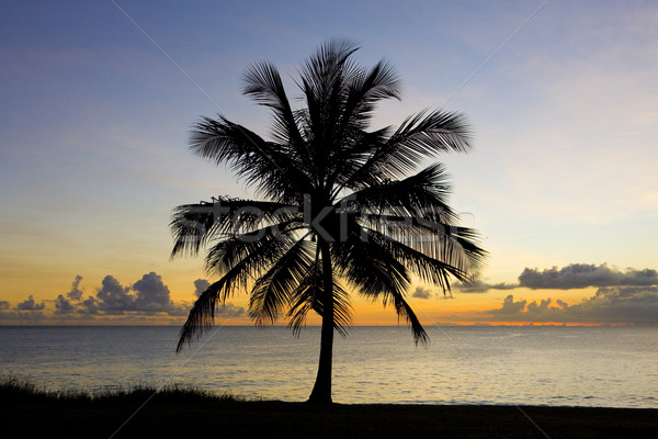 Zonsondergang caribbean zee Barbados boom landschap Stockfoto © phbcz
