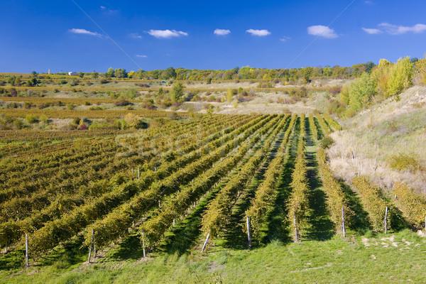 Foto stock: República · Checa · paisagem · plantas · cair · agricultura · crescer