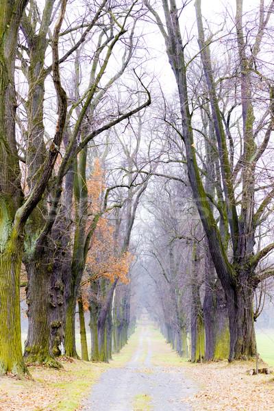 őszi sikátor fa növény út ősz Stock fotó © phbcz
