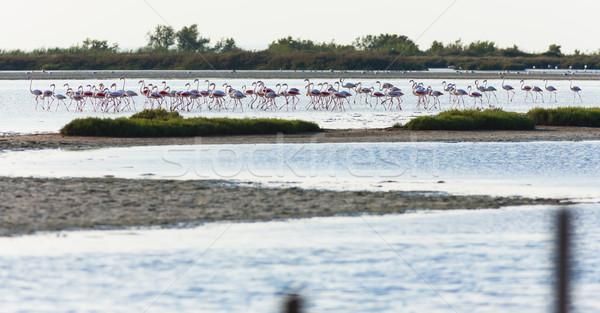 Franciaország tájkép madár Európa flamingó természetes Stock fotó © phbcz