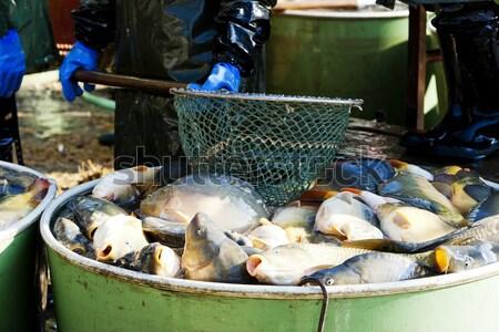 Aratás tavacska halászat állat tank halász Stock fotó © phbcz