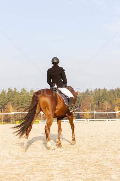 Lovas lóháton nők ló fut ősz Stock fotó © phbcz