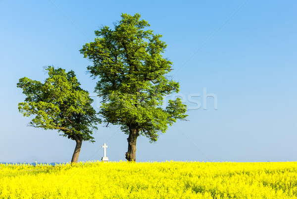 Stock photo: trees and cross with rape field, Czech Republic