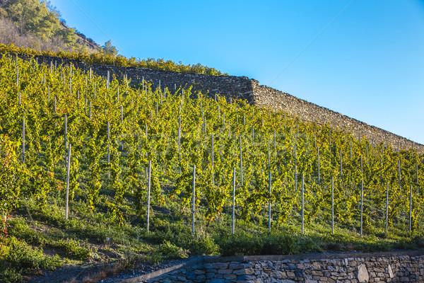 Region Szwajcaria charakter jesienią winorośli naturalnych Zdjęcia stock © phbcz