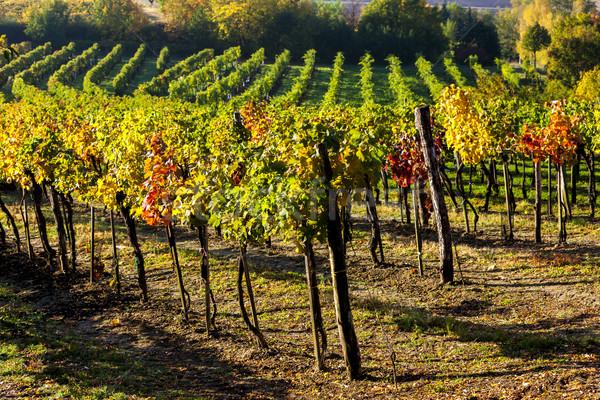 мнение снизить Австрия пейзаж осень Сток-фото © phbcz