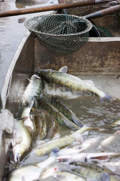 Oogst vijver vissen dier tank buitenshuis Stockfoto © phbcz