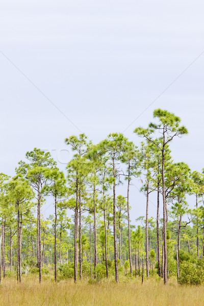 Everglades National Park, Florida, USA Stock photo © phbcz