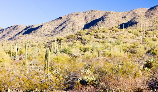 公園 アリゾナ州 米国 風景 工場 沈黙 ストックフォト © phbcz