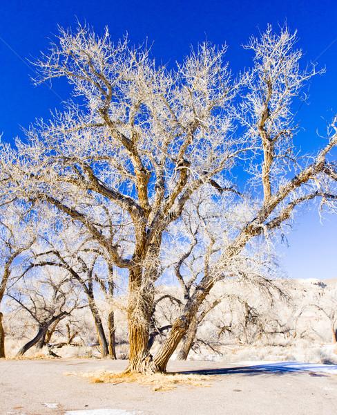 Hiver arbres Utah USA nature neige Photo stock © phbcz