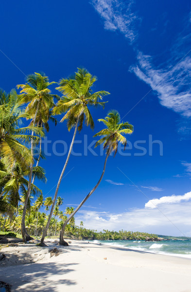 Cumana Bay, Trinidad Stock photo © phbcz
