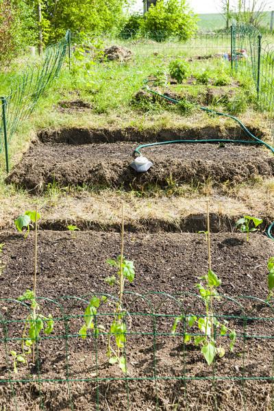 Kert palánták paradicsomok tavasz paradicsom mezőgazdaság Stock fotó © phbcz