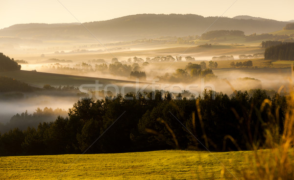 autumnal landscape in fog, Sumava, Czech Republic Stock photo © phbcz