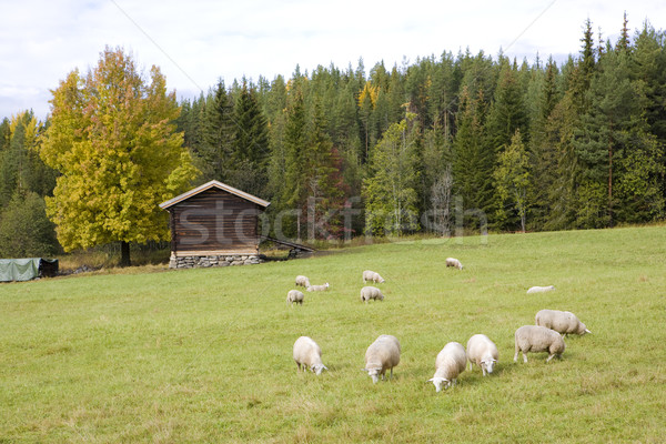 landscape near Nesbyen, Norway Stock photo © phbcz