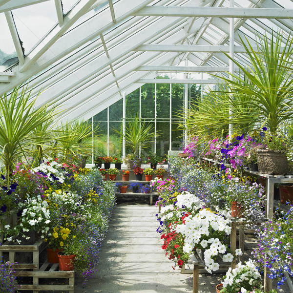 greenhouse, Birr Castle Gardens, County Offaly, Ireland Stock photo © phbcz