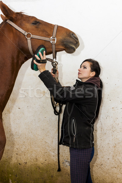 Stock photo: equestrian combing the horse