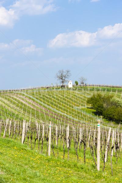 Primavera República Checa paisagem planta europa naturalismo Foto stock © phbcz