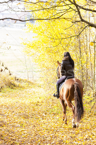Cheval nature femmes cheval Photo stock © phbcz