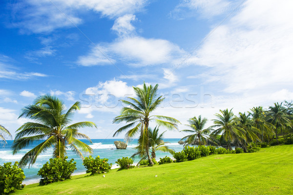 Bathsheba, East coast of Barbados, Caribbean Stock photo © phbcz