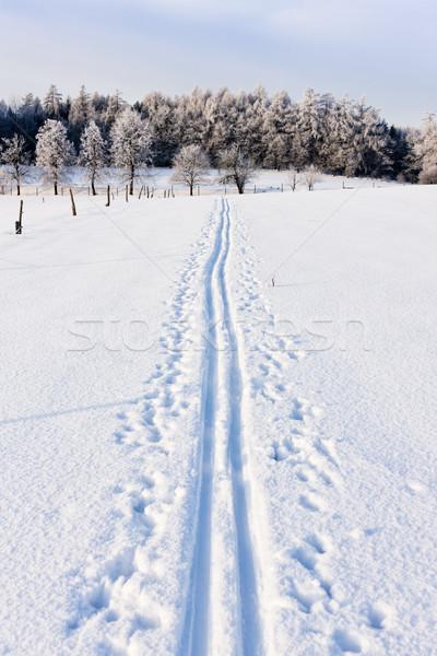 Inverno paisagem República Checa árvore neve imprimir Foto stock © phbcz