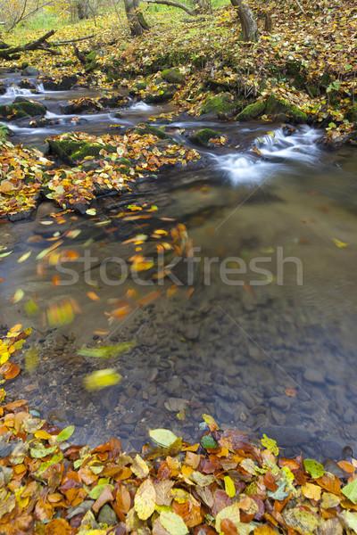 Automne Slovaquie nature feuille rivière usine Photo stock © phbcz