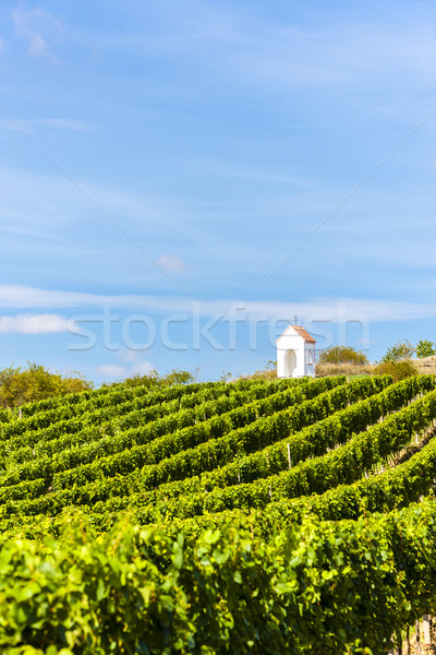 wayside near Hnanice with vineyard, Southern Moravia, Czech Repu Stock photo © phbcz
