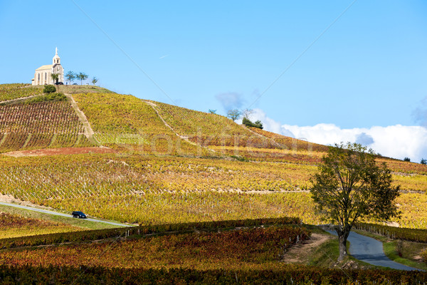 vineyards grand cru in Beaujolais, Fleurie, Rhone-Alpes, France Stock photo © phbcz