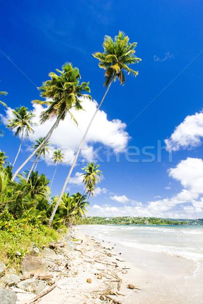 Rockly Bay, Tobago Stock photo © phbcz