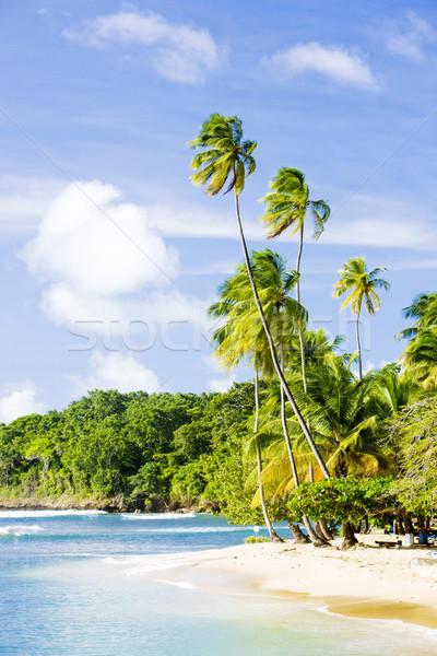 Mount Irvine Bay, Tobago Stock photo © phbcz
